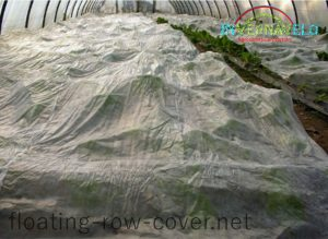 frost protection blanket in greenhouse